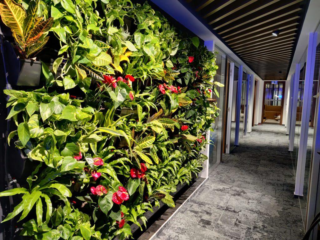 Rozmanitá vertikální zelená stěna s rostlinami