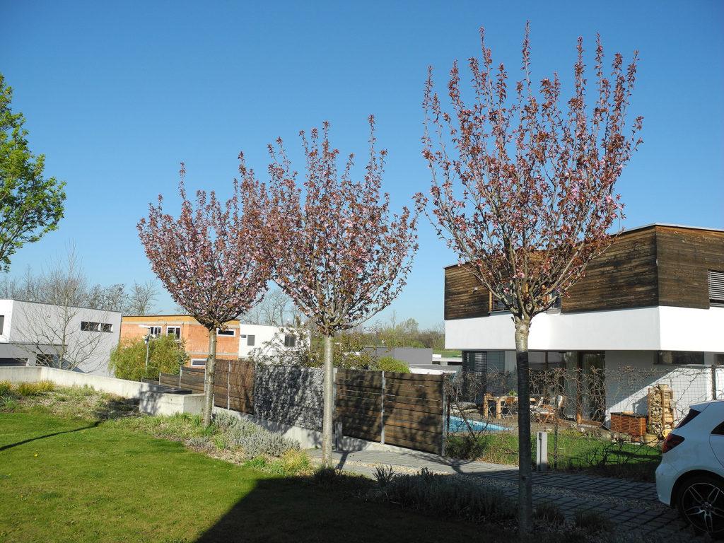 Firma Greenvia se specializuje na realizaci zahrad - ukázková reference