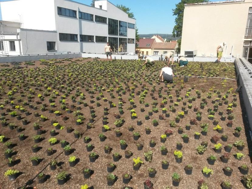 Příklad naší realizace zelené střechy na základní škole